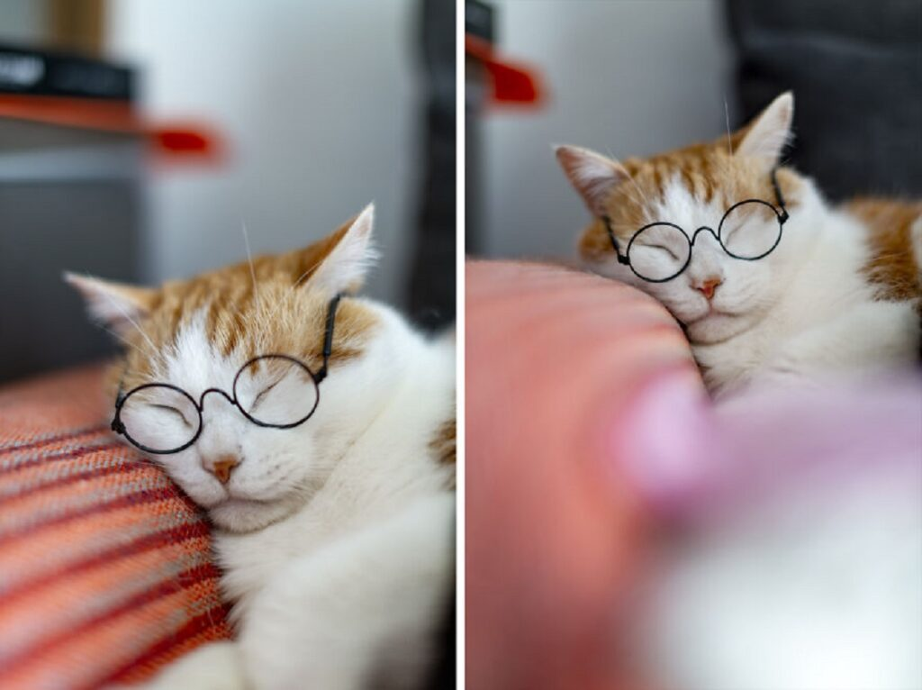 gattino europeo addormentato