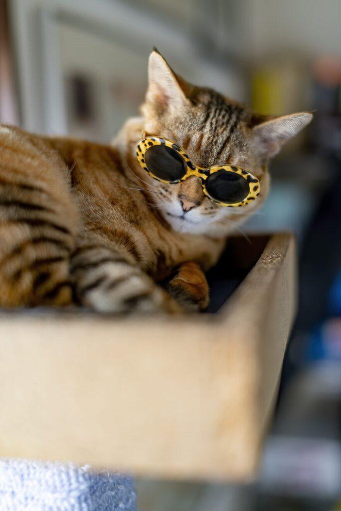 gatto adorabile tigrato