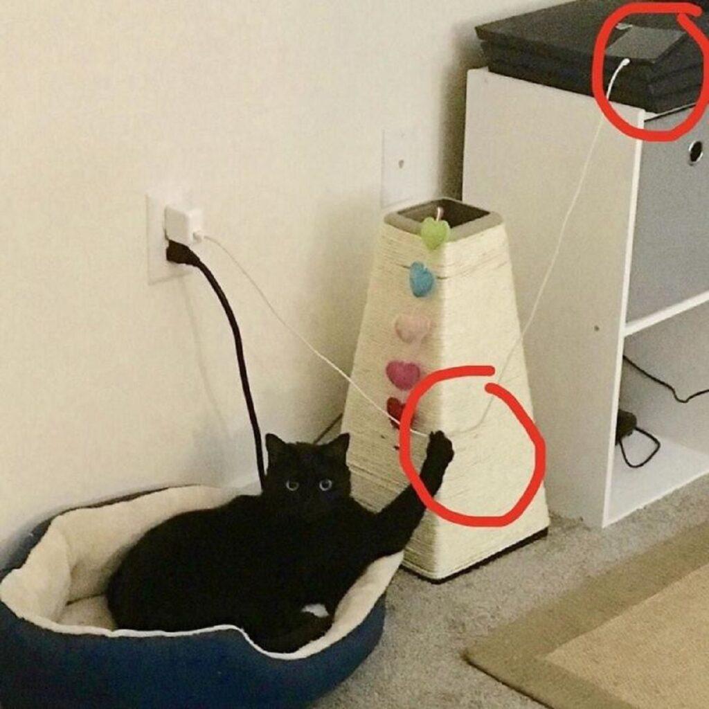 gatto nero simpatico