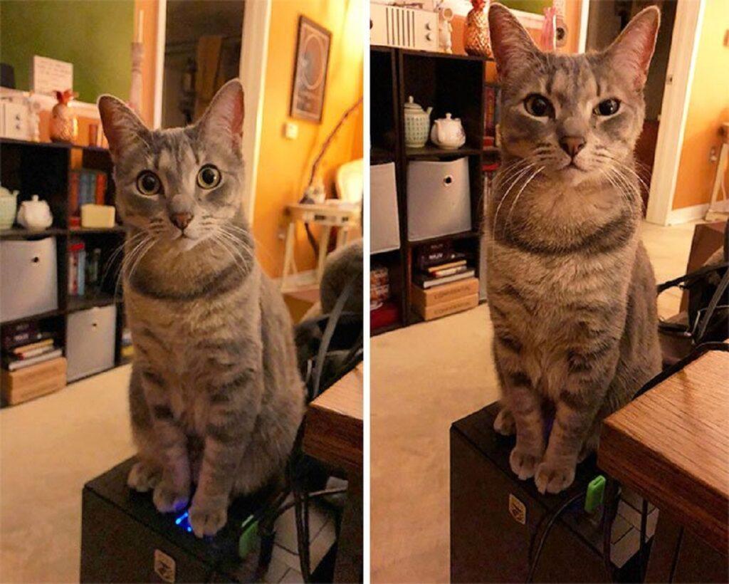 gatto seduto simpatico