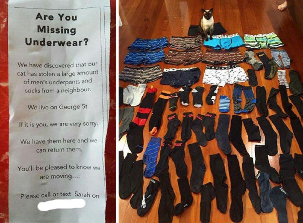 gatto calzini ladro