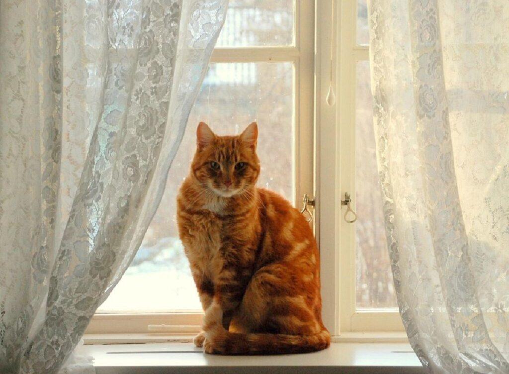 gatto arancione finestra