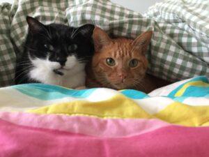 gatti amici dormire