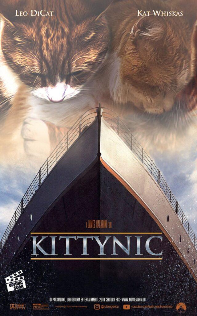 gatti nave abbraccio