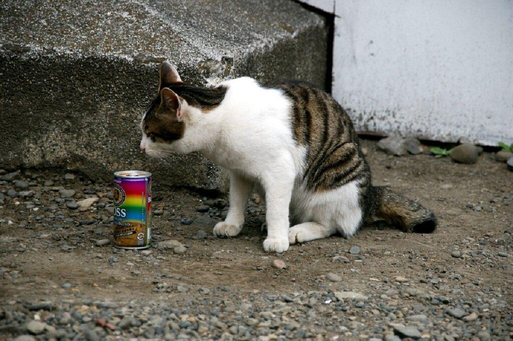 barattolo gatto europeo