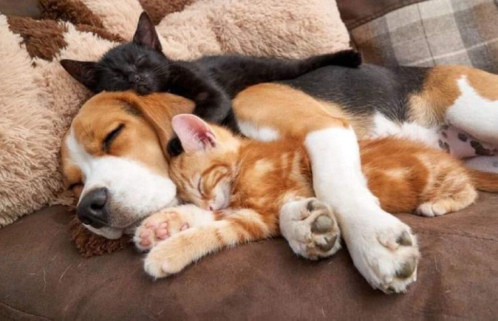 sonnellino cane gatto
