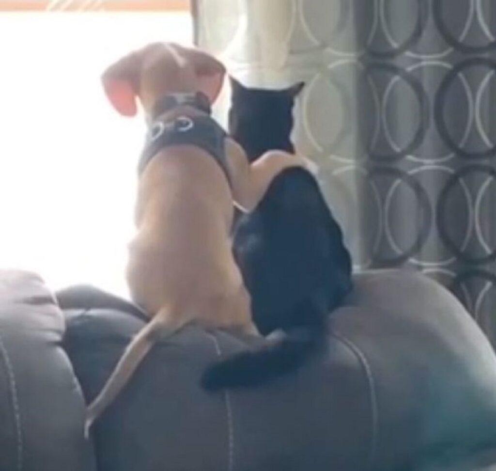 cane zampa gatto