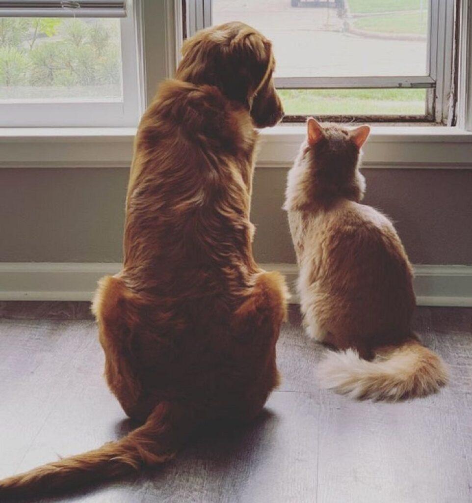 amici coppia gardare