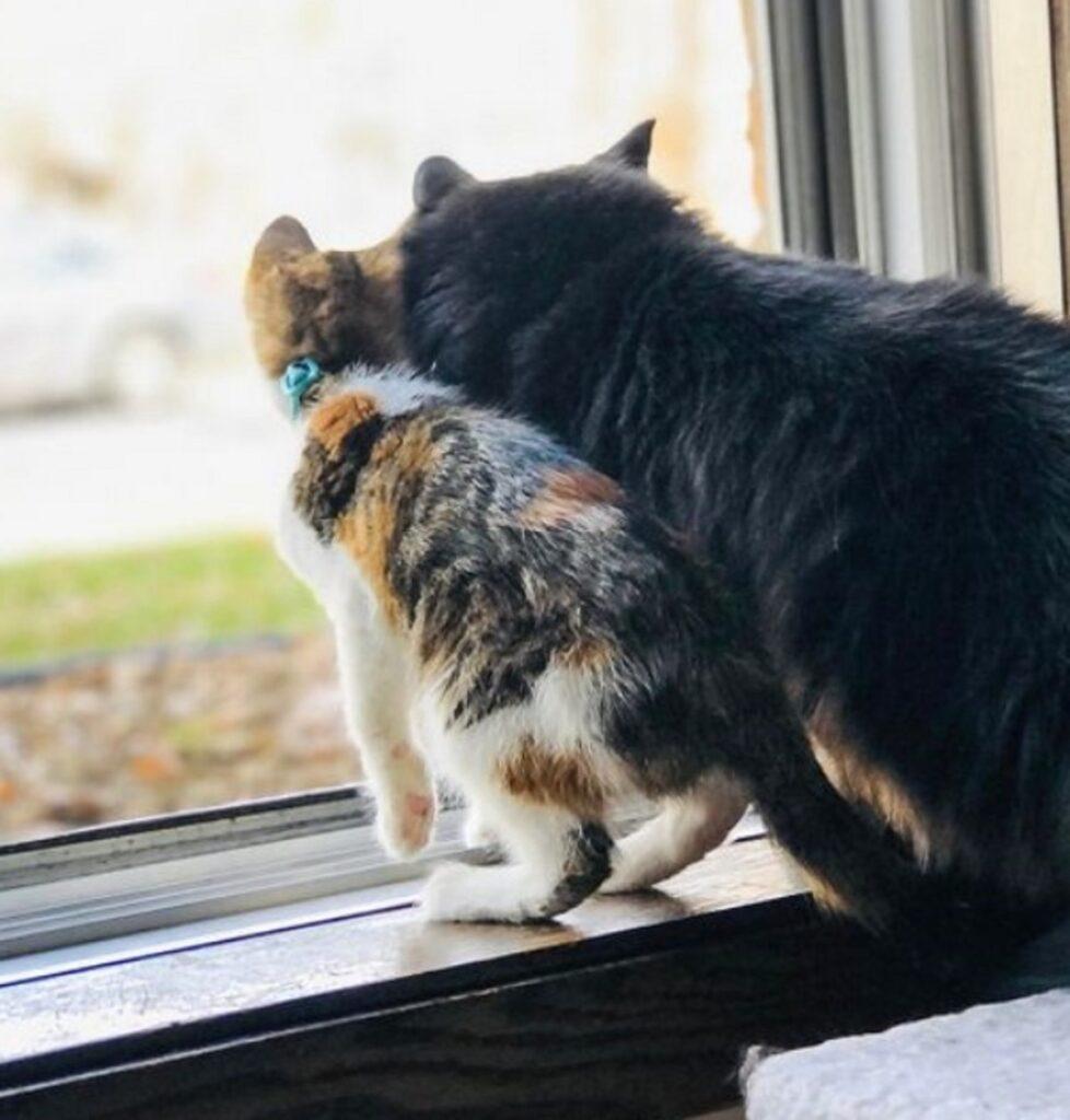 finestra mici coppia