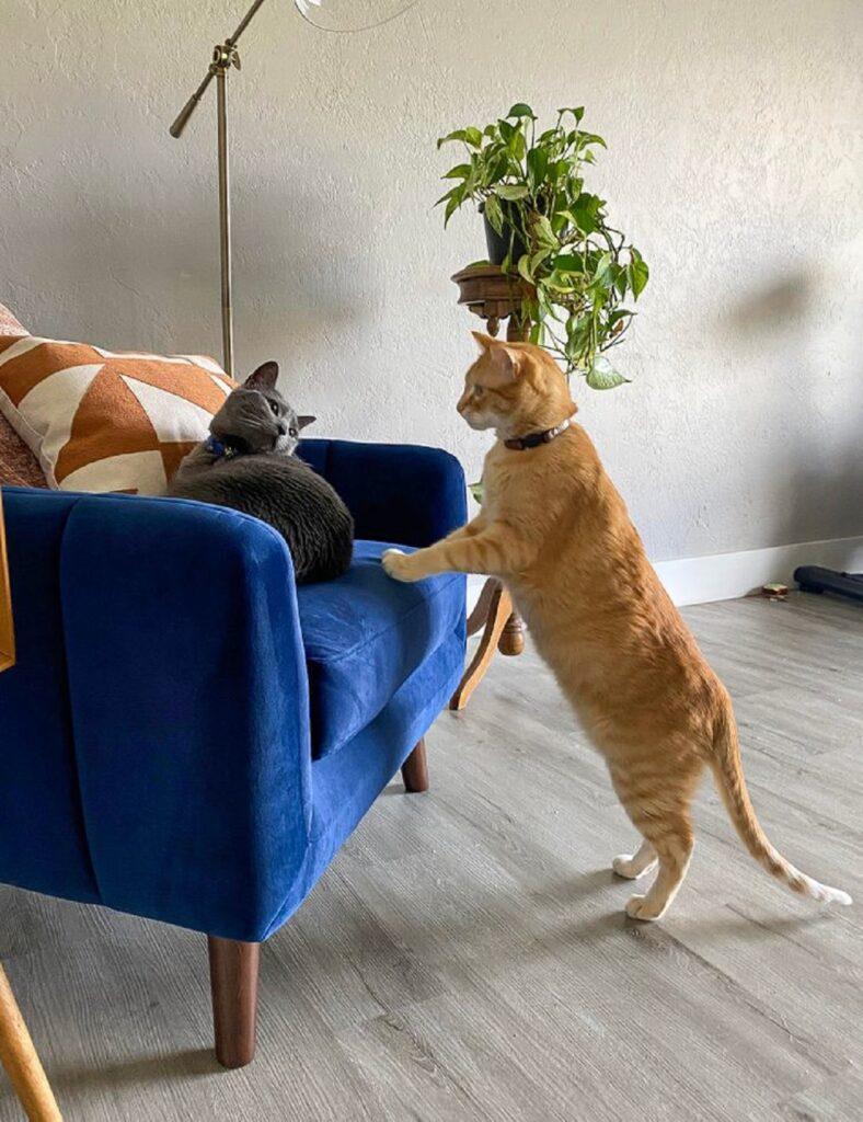poltrona gattini sedere
