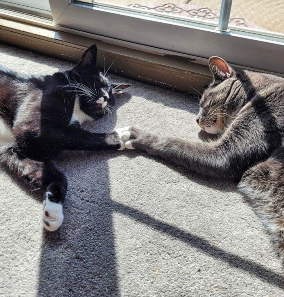 zampa contatto felini