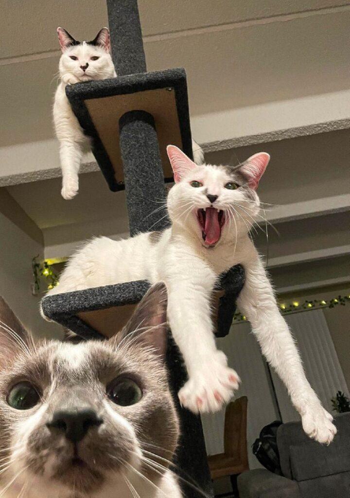 tre gattini tiragraffi