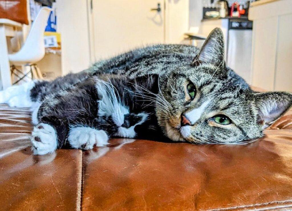 gatto soriano amico