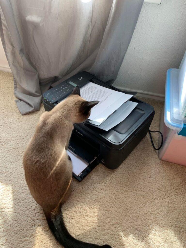 gatto guarda fotocopiatrice