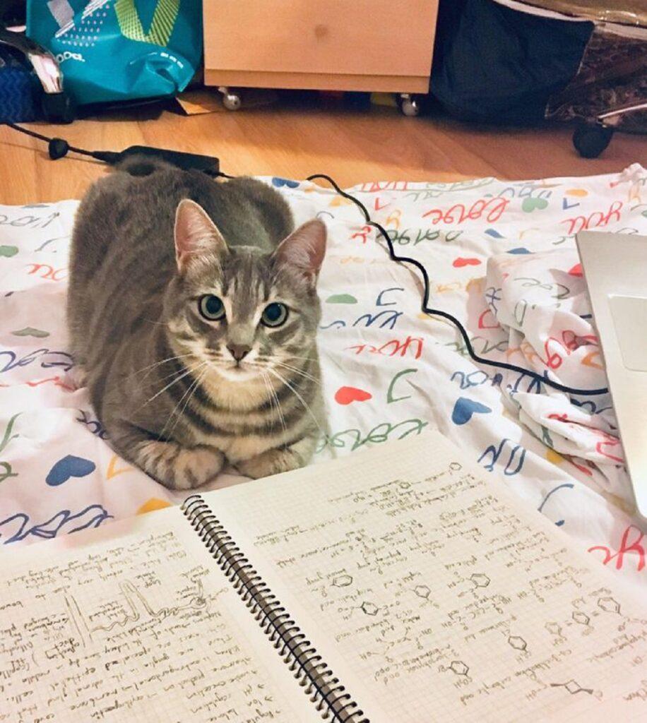 gatto quaderno scritto
