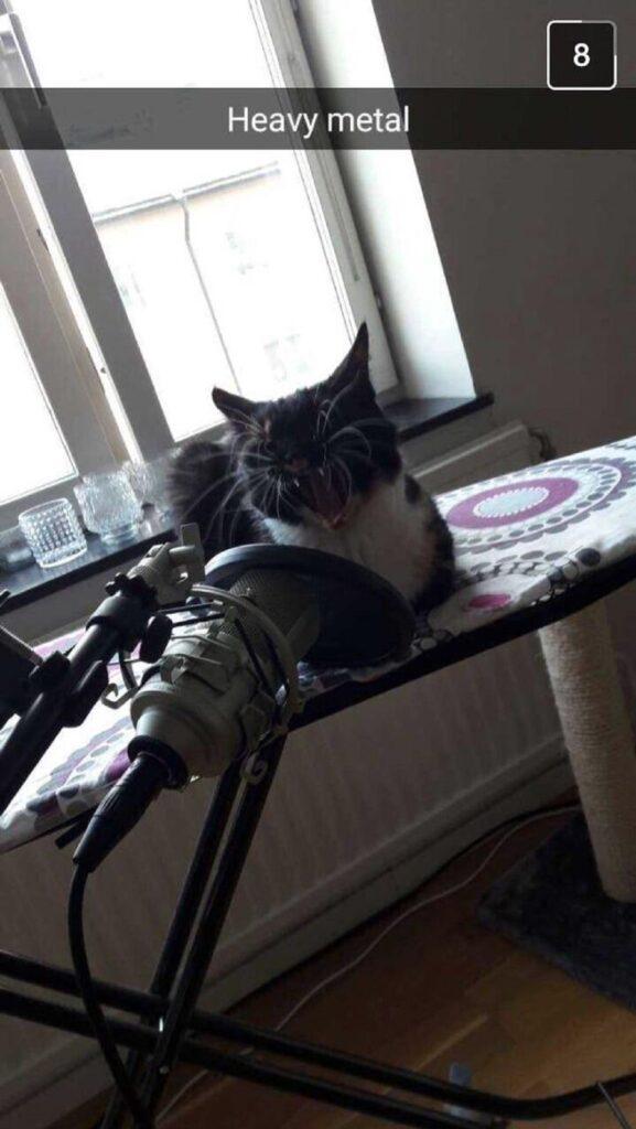 felino microfono bocca