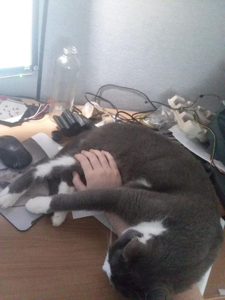 gatto braccio papà