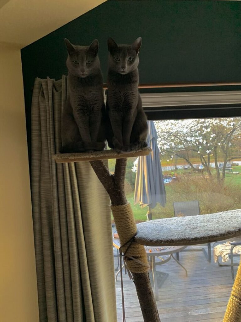 felini grigi insieme