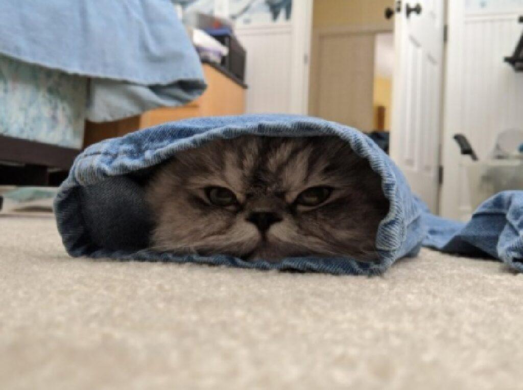gatto pavimento buttato terra