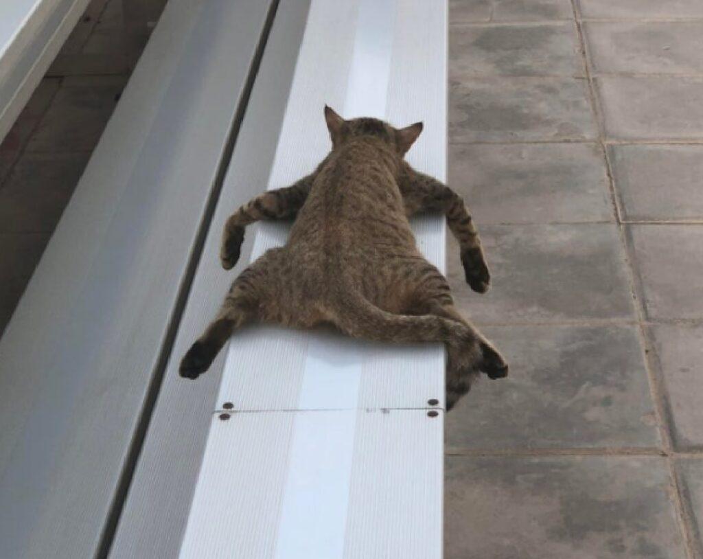 gatto abitudine dormire