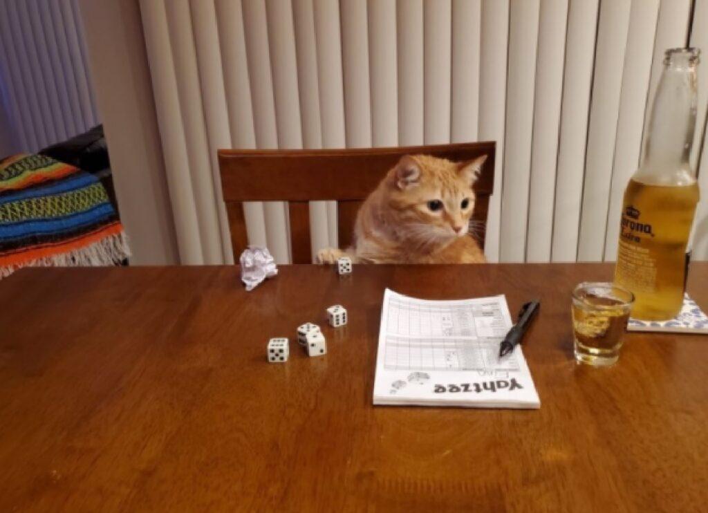 gatto rosso passatempo sabato