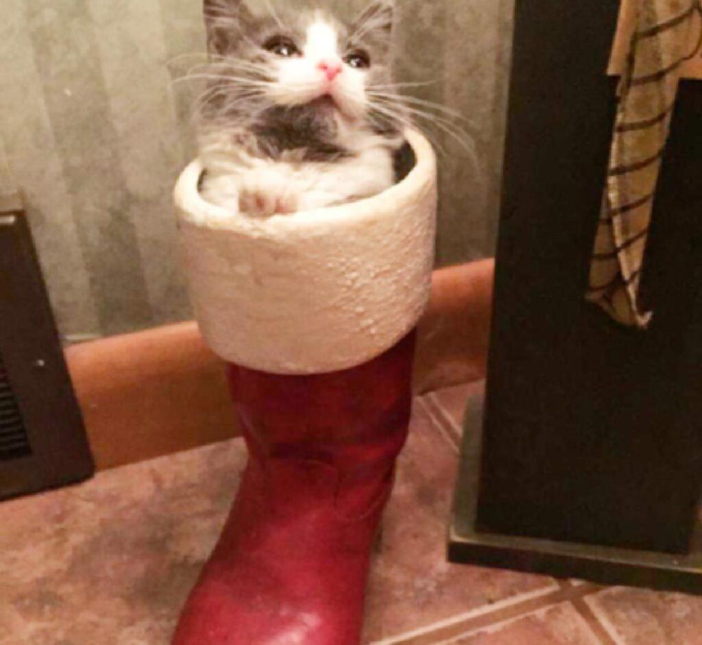 gatto finito in uno scarpone