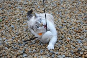 gatti che non sanno come stare fermi