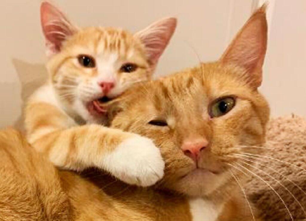 gatto fratello mangia orecchio