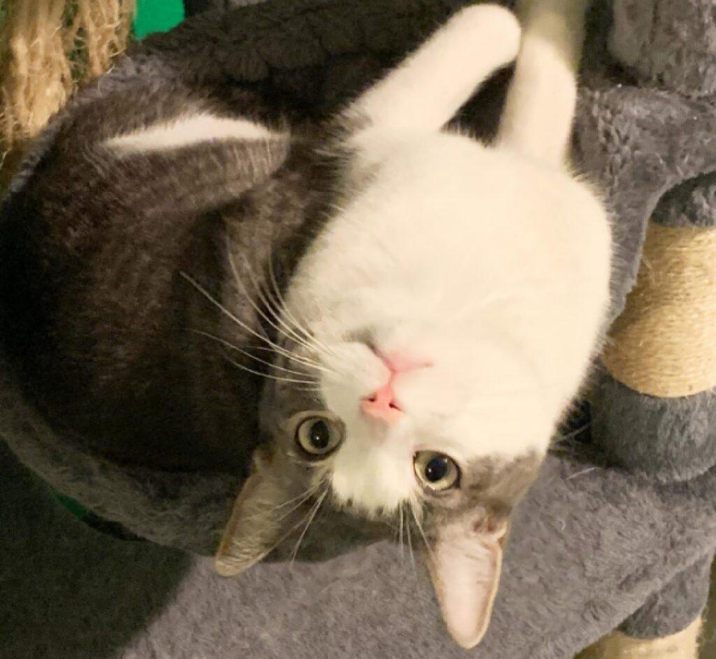 gatto si arrampica al contrario