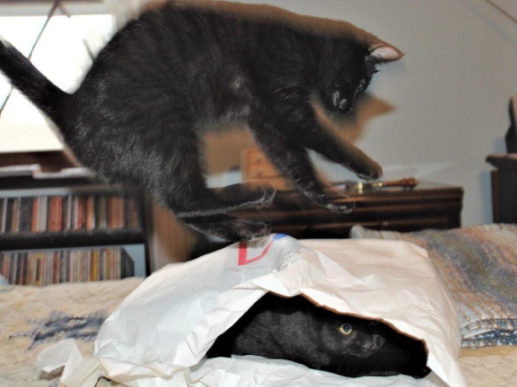 gatto nero scherzo amico