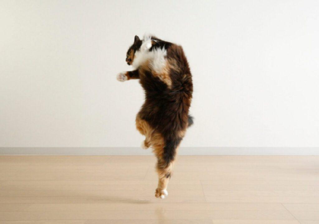 gatto salta in alto stanza