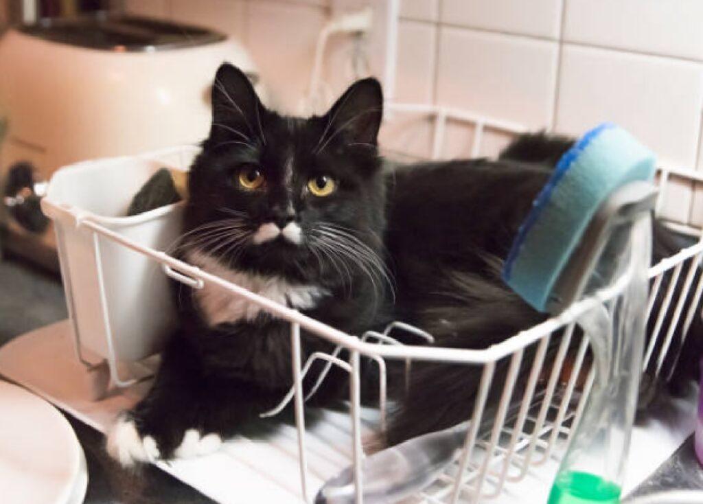 gatto dentro cestello lavaggio