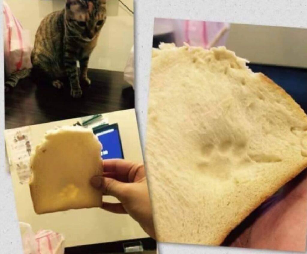gatto lascia il segno pane