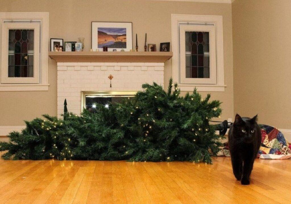 gatto albero natale cade a terra