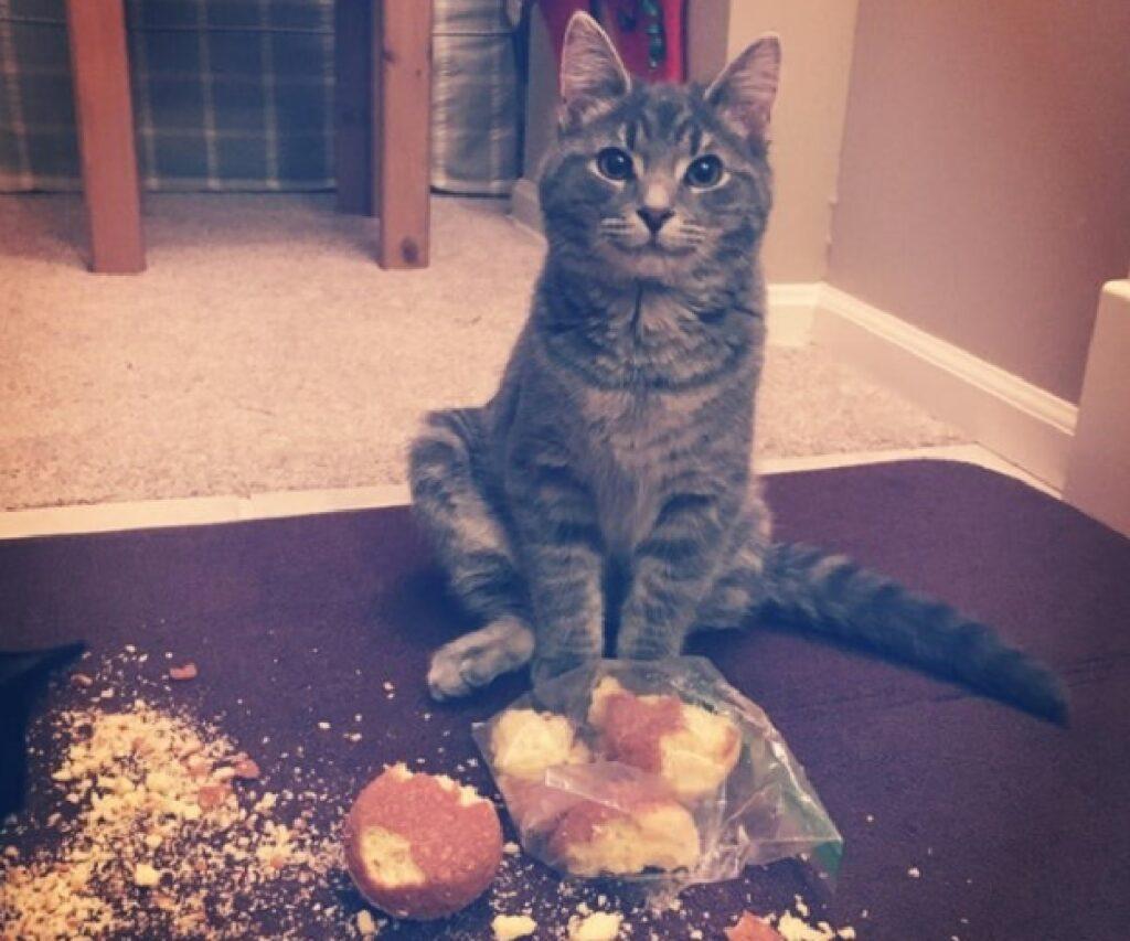 gatto prende pane da cucina