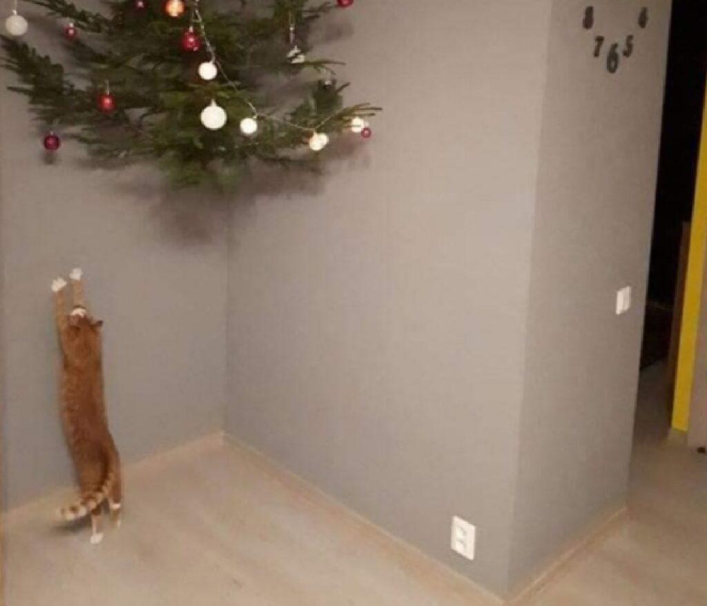 gatto arancione albero angolo