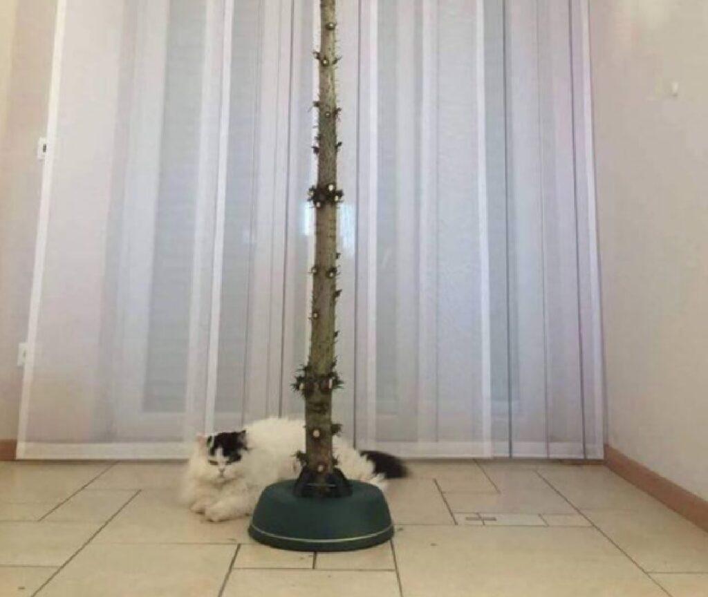 gatto albero senza rami