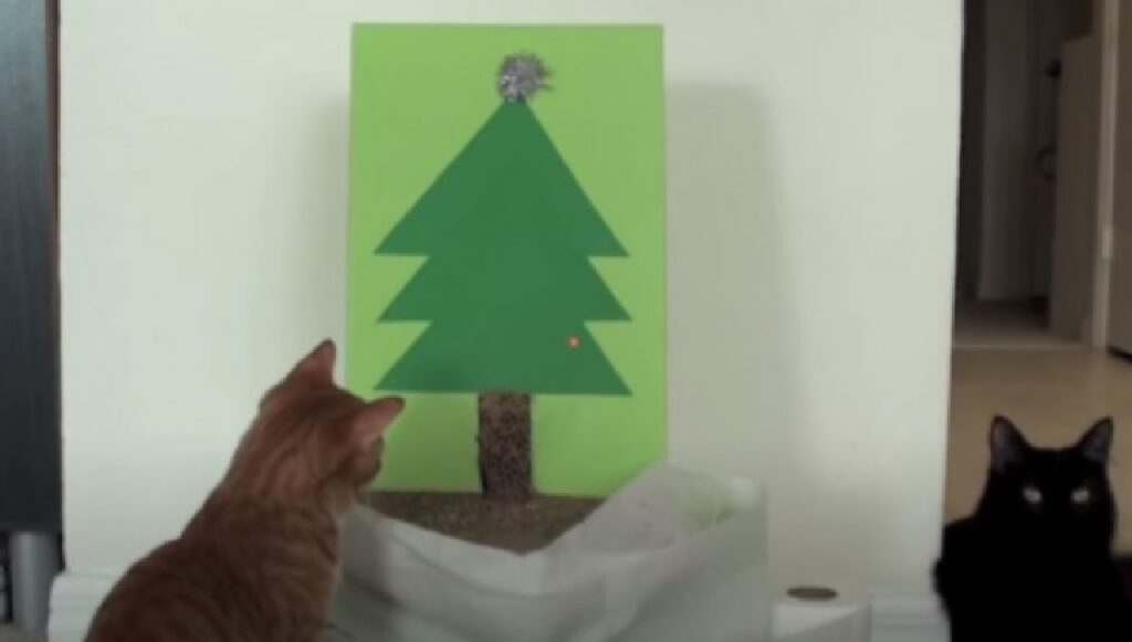 gatto ammira albero su cartone