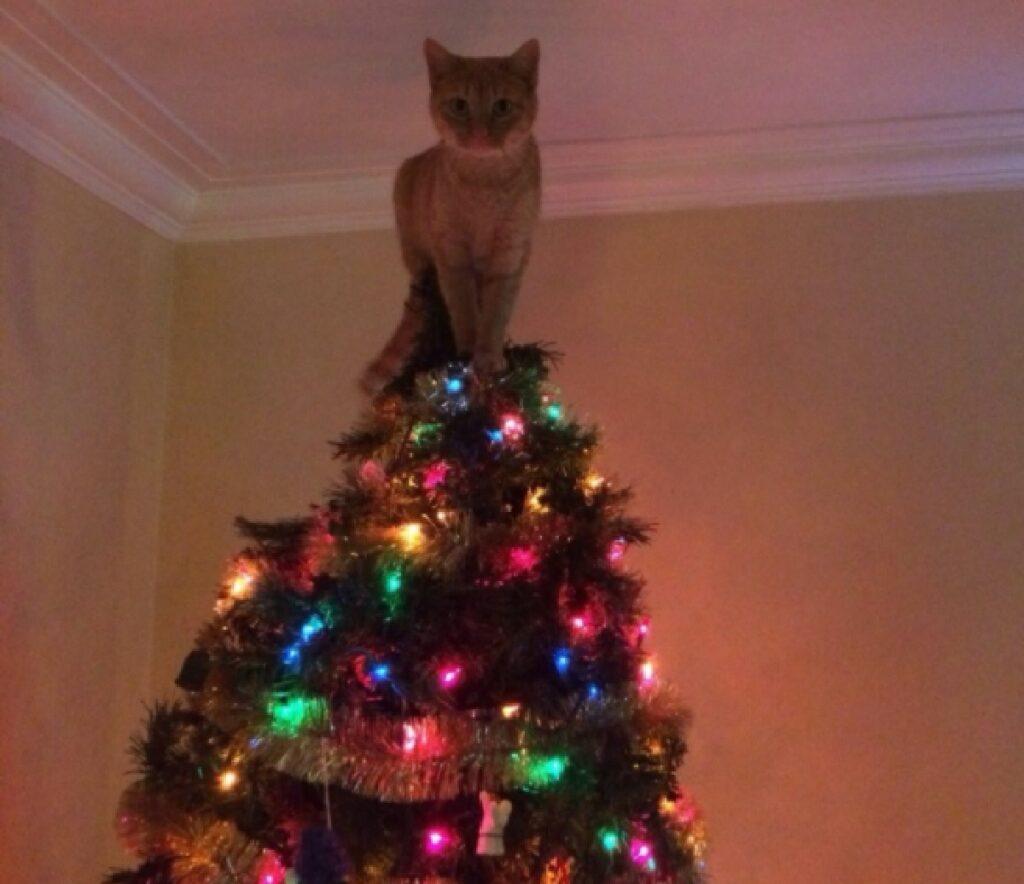 gatto diventa stella di natale