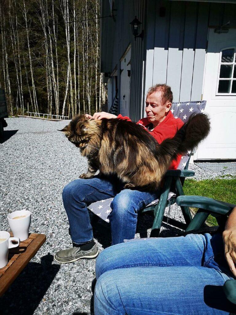 papà seduto gatto