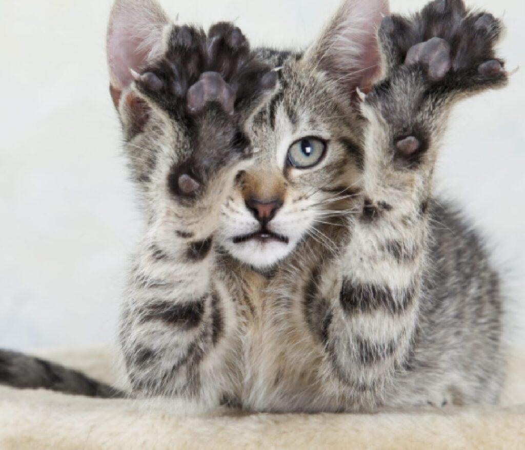 gatto soriano si stira muscoli