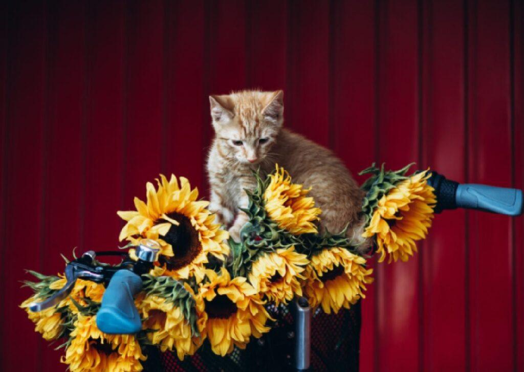 gatto confuso risveglio floreale