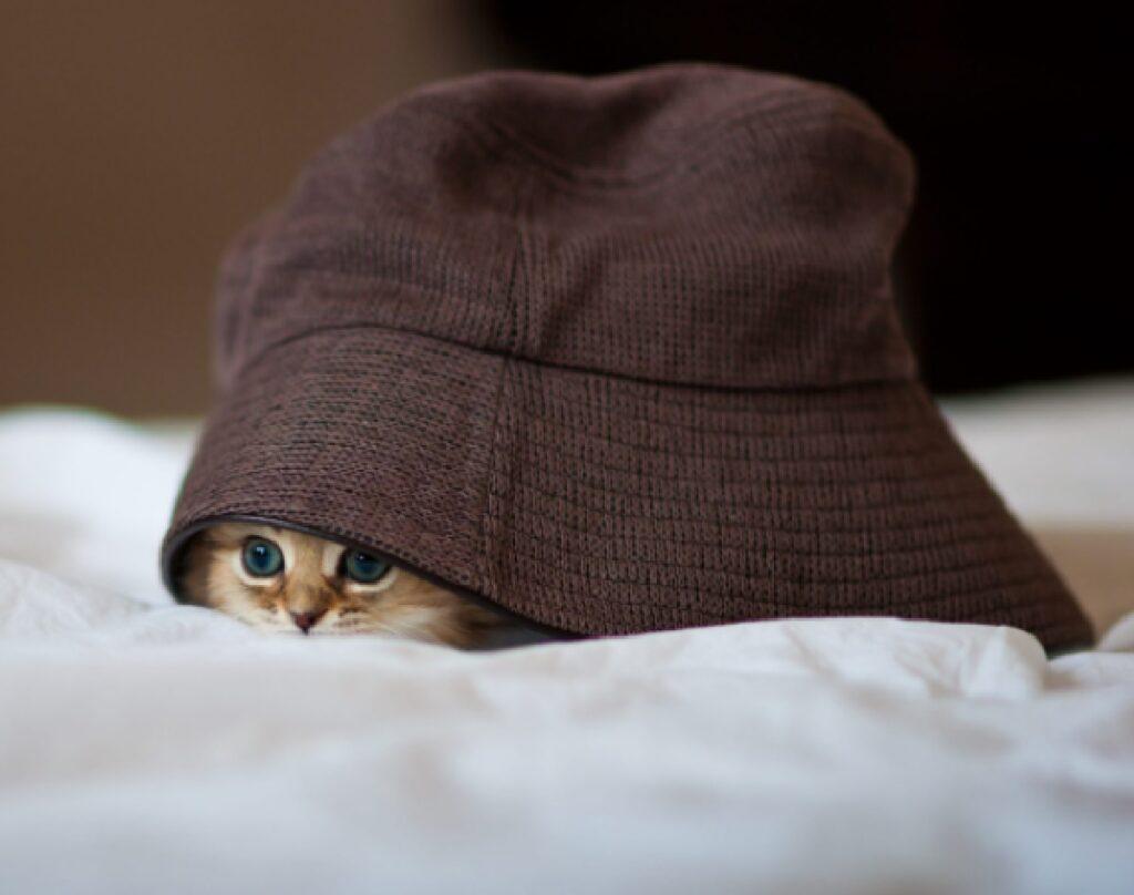 gatto risveglio sotto cappello