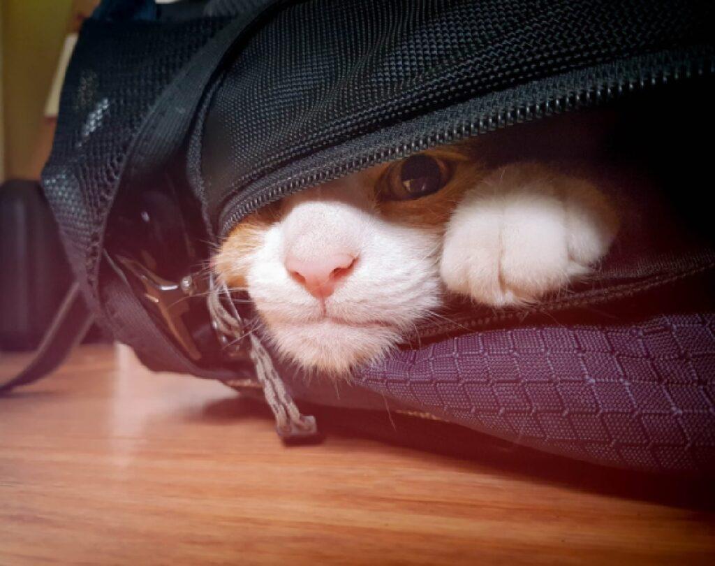 gatto si sveglia dentro zaino