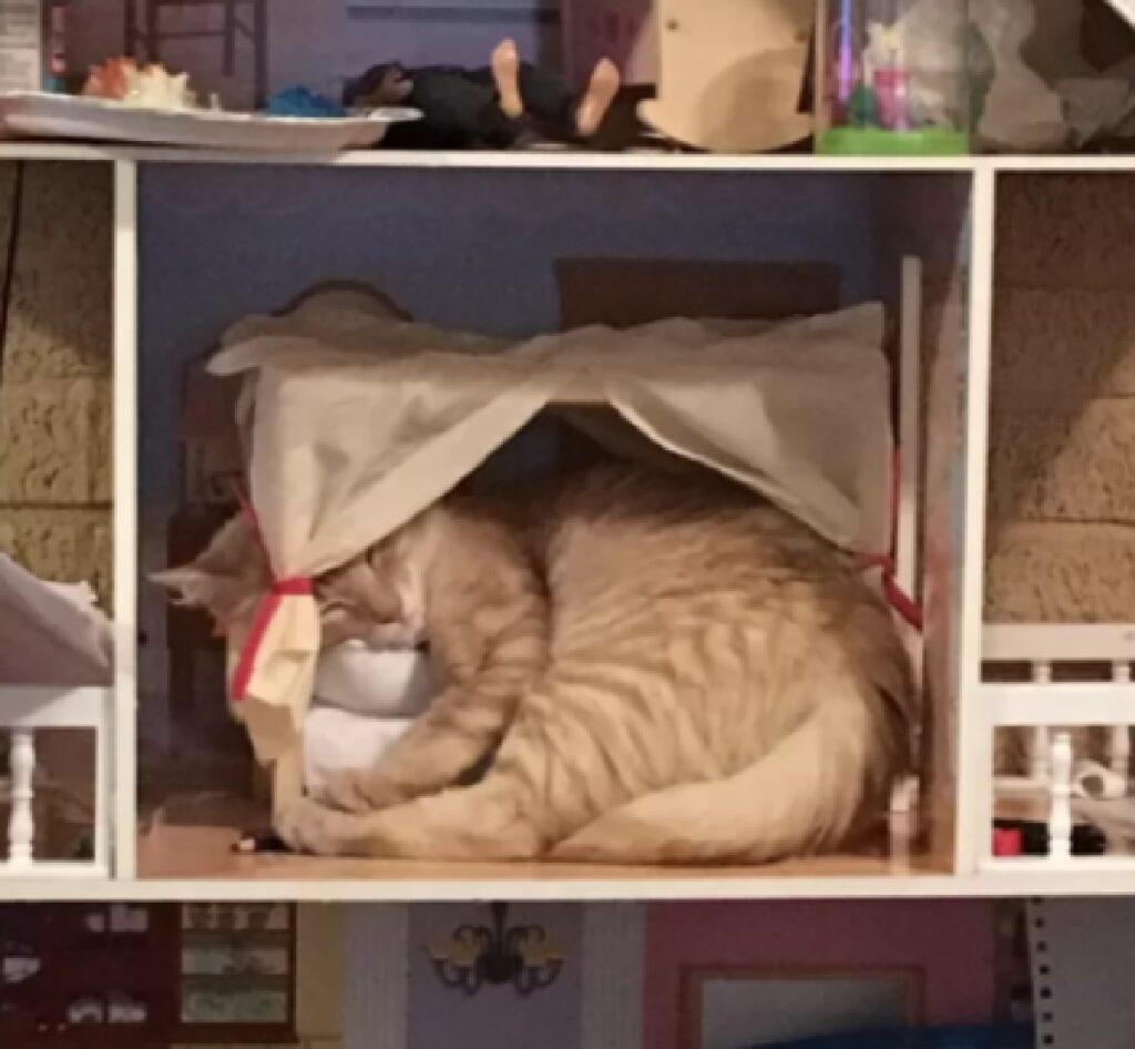 gatto rosso dorme casa bambole