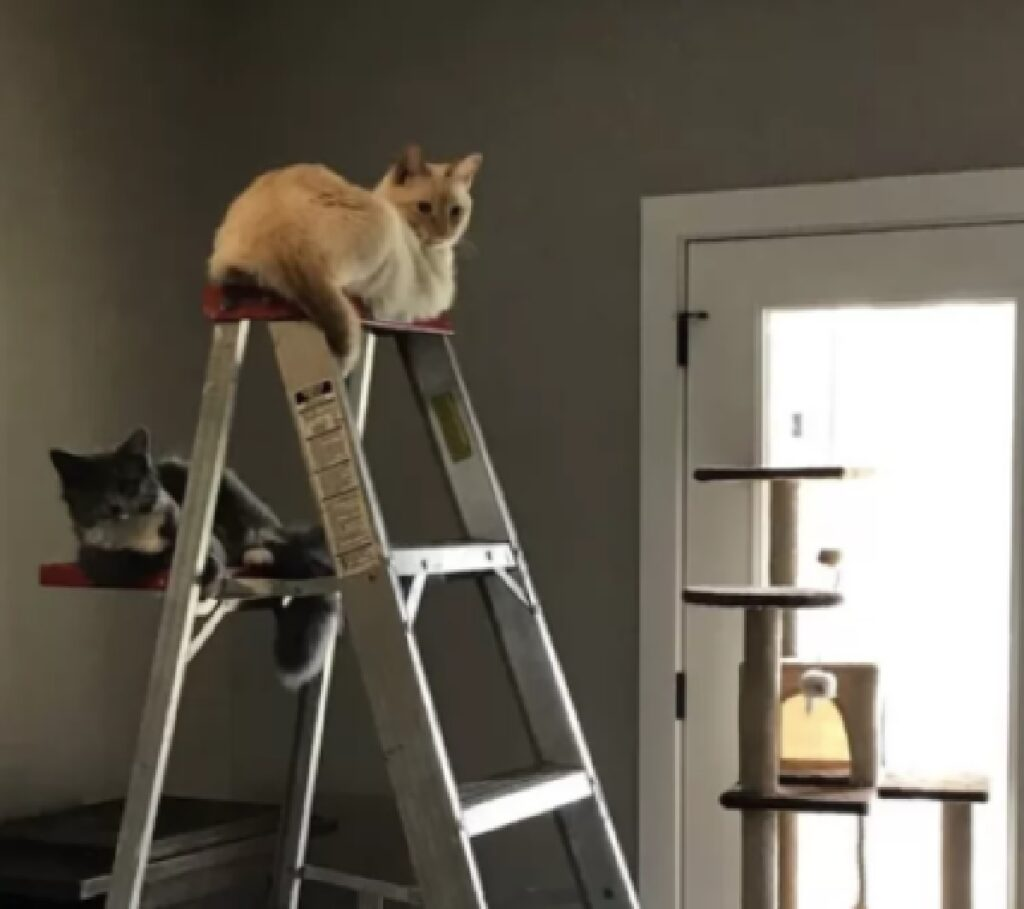 gatti pisolino su scala