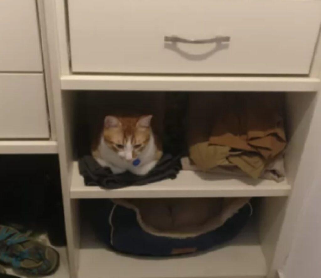 gatto preferisce dormire cassetto