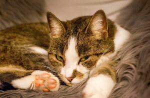 foto gatti pisolino in luoghi