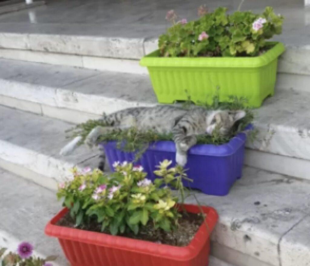 gatto vasi fiori luogo comodo