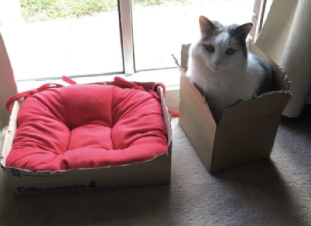 gatto preferisce cartone a cuccetta